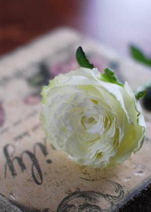 <h2><br/>黄緑色から開花につれて白くなっていく大輪のバラです。ふんわりとした花びらがかわいらしく魅力的です。</h2>