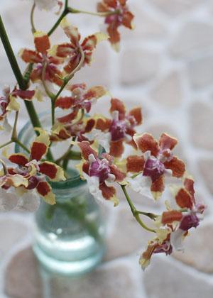 <h2><br/>甘い香りを持つ蘭の一種です。赤茶と白のコントラストが特徴的です。繊細で美しく、和装ブーケにもよく似合います。</h2>