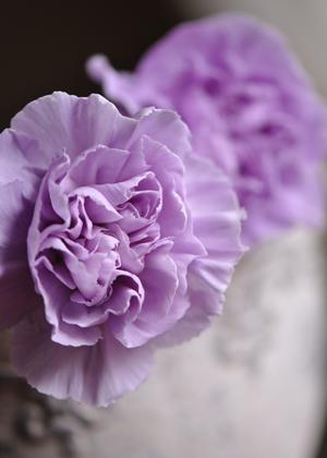 <h2><br/>水のようにやわらかな淡い青紫色が特徴のカーネーションです。ブライダルやお祝いごとに華やかな演出をしてくれます。</h2>