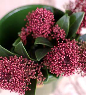 <h2><br/>晩秋から冬にかけて多く出荷されるお花。写真は蕾です。他にグリーンもあります。クリスマス花材としても大変人気のある高級な花材です。</h2>