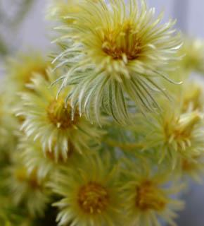 <h2><br/>まるでテディーベアにさわったようなふわふわ感。暖か味のある暖色系やセピア色のお花との組合せが素敵です。</h2>