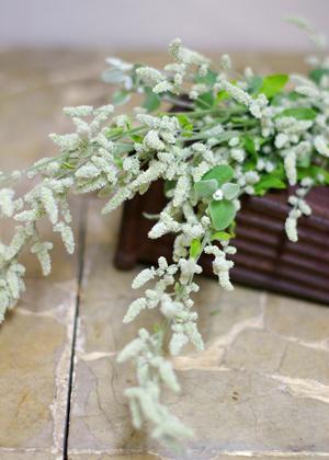 <h2><br/>多数に枝わかれした房状の花。秋から冬にかけて咲き、細くすらりとした姿がふんわりとしたイメージにしてくれます。</h2>