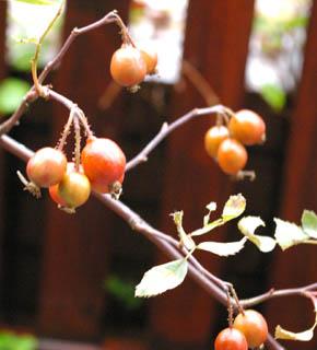 <h2><br/>秋を代表する実もの。1.5㎝くらいのバラの実が鈴のようになります。和にも洋にもアレンジができ、季節感のあふれる仕上がりになります。</h2>
