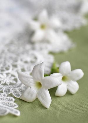 <h2><br/>星のような形をした可愛いお花。ジャスミンによく似ています。メインになるお花にそっと添えて・・・。清楚なウェディングブーケにぴったりです。</h2>