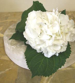 <h2><br/>真っ白なあじさい。ウエディングシーンで非常に人気の高いお花。クラッチブーケのようにさりげなく束ねて使いたいお花です。</h2>