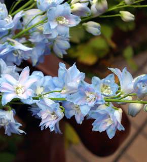 <h2><br/>花の中心がほんのり紫色を帯びたロイヤルブルー。青いお花は種類が少ないので貴重な存在です。</h2>
