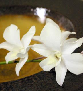 <h2><br/>マット感のある白、キリッとした花形が美しい。線をいかしてクレッセントやキャスケードブーケなどに仕立てたいお花です。</h2>