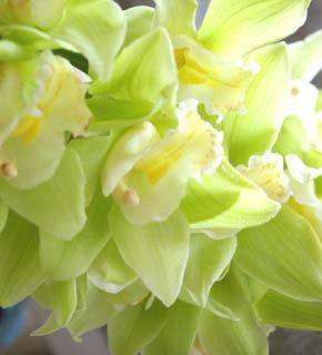 <h2><br/>華絢爛な主役級のお花ですが、添えのお花にもなります。色も豊富で、1年中オーダー可能。ドレスにも和装にもエキゾティックにもなります。</h2>