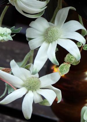 <h2><br/>薄いグリーンの入ったオフホワイトで、花も葉も細かい毛で覆われています。柔らかな質感で、やさしく清楚な雰囲気のブーケに仕上がります。</h2>