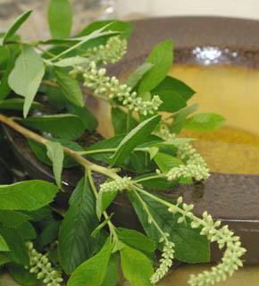 <h2><br/>白いつぼみと明るい緑色のコントラストがさわやかさを強調する枝もの。遊びのある花のラインをいかしたい花材。和のテイストにも向きます。</h2>