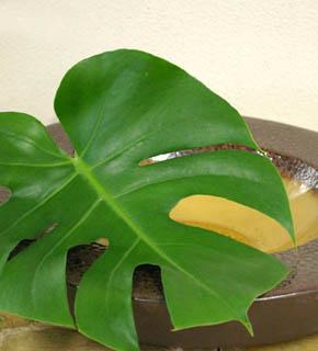 <h2><br/>大きく個性的な葉の形が大胆なデザインを可能にします。ブーケにもアレンジにも南国 風を気取った演出におすすめです。</h2>