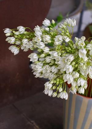 <h2><br/>ほっそりとした茎に多数のかわいらしい小花がついています。花持ちがよく、ブーケに向いています。清楚なイメージに仕上がります。</h2>