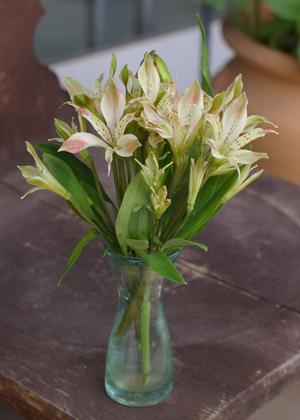 <h2><br/>小さくてかわいらしい抹茶色の小花が珍しいアルストロメリアの一種。メインのお花に添えて可憐なイメージのブーケに・・・</h2>