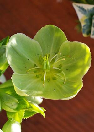 <h2><br/>黄緑色の丸みを帯びた花びら。花でありながらグリーンとしても使って、メインのお花を最高に引きたててくれます。</h2>