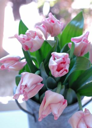 <h2><br/>花弁の中が強くくびれ、先端が反り返っているのが特徴的。花は小さめですが、波打ちが多くボリューム感があります。淡いピンクが可愛らしい印象に・・・</h2>