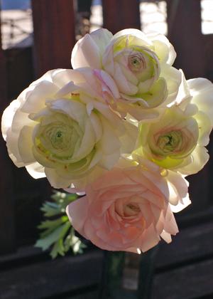 <h2><br/>何枚も重なった柔らかい花びらが優しい印象を与えてくれる春を代表するお花です。カラーバリエーションが豊富ですのでお好みの色をお選びください。</h2>