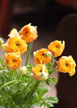 <h2><br/>いくつも折り重なる薄い花びらが柔らかい印象を与えてくれる春のお花。アレンジに入れるだけで春らしいさわやかな仕上がりになります。</h2>