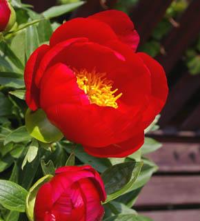<h2><br/>情熱的な赤が印象的なお花です。大きめの葉ものと合わせて、シンプルモダンに仕上げたいものです。エキゾティックなイメージのブーケ・・・なんていかがでしょうか?</h2>