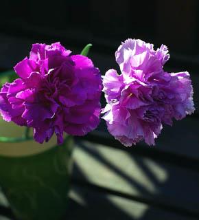<h2><br/>濃淡5色の珍しい、青いカーネーション。高貴な濃い紫色からライラックブルー・・・、永遠の幸せを願って作られた「幸せの青いお花」だそうです。そんなお花をブーケに仕立ててみませんか?</h2>