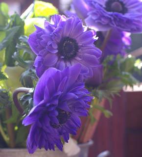 <h2><br/>赤・紫・ピンク・白・・・カラフルで絵画的な色彩と形が印象的なお花です。ブーケにするなら、クラッチがおすすめ。テーブル花にもむきます。</h2>