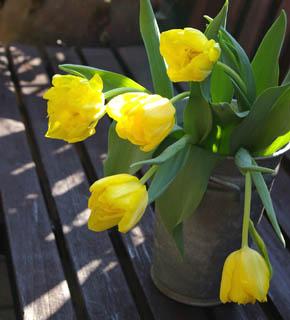 <h2><br/>とびきり明るいレモンイエローのチューリップ。八重咲きでボリュームがあり、咲いた姿がかわいいお花です。ブーケにアレンジにおすすめです。</h2>