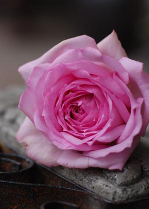 <h2><br/>花びらの重なり方がとても美しいオールドローズ咲きの大輪バラです。あまい香りのする美しいブーケになります。お色直しのブーケに人気です。</h2>