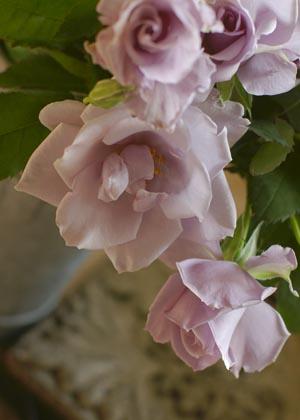 <h2><br/>薄紫色のひらひらの花びらがとても美しく、上品なお花です。柔らかい茎を生かして繊細で可憐なブーケに仕上がります。</h2>