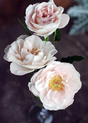 <h2><br/>ほんのりピンク色がかわいらしい新種のスプレーバラ。やわらかい花弁が特徴です。ブライダルにはぴったりの一輪です。</h2>