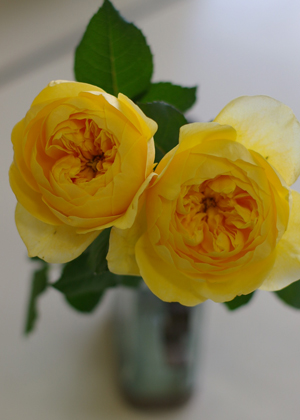 <h2><br/>黄色味をおびた美しいオレンジ色のロゼット咲きの大輪バラ。開花とともに甘い香りがしてきます。</h2>