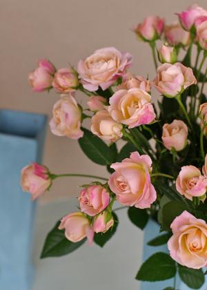 <h2><br/>外側の花びらだけは濃いめのピンクで、内側は淡いサーモンピンクのスプレーバラ。丸くころりと咲く、かわいらしい中輪タイプで、どんなウェディングブーケにも似合います。</h2>