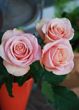 <h2><br/>花びらの色合いがとても美しくややオレンジ色のこってりした大輪バラ。オシャレなブーケに仕上がります。</h2>