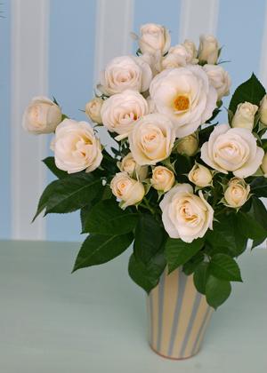 <h2><br/>ひらひらと優しい花びらが雪のように白くかわいらしい中輪バラ。挙式用の清楚なブーケにも、お色直しのカラーブーケにもよく似合います。</h2>