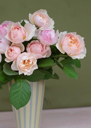 <h2><br/>透明感のあるピンク色のイングリッシュローズ。あまくて優しい香りがしてきます。ゆっくりとロゼット咲きに開いていきます。上品なブーケに仕上がります。</h2>