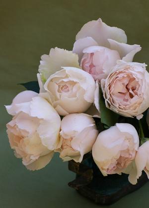 <h2><br/>オールドローズのようなカップ咲きの大輪バラ。ほとんど白に近い薄いピンク色です。香り高く、ブーケに大変人気があります。</h2>
