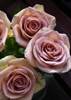 <h2><br/>ほんのり紫色を帯びたセピア色のバラ。 開花しながら色合いが変化していきます。 シックでお洒落なブーケに仕上がります。</h2>