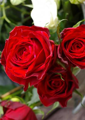 <h2><br/>深みのあるゴージャスな赤。花びらの縁は黒っぽく、インパクトのある大輪バラです。ドレスに持つといちだんと華やかになります。大人っぽいブーケが好みの方や、和装にもよく似合います。</h2>