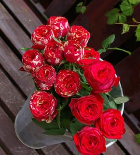 <h2><br/>ぽってりと丸みを帯びた花形がとてもキュート。少しエンジ色を帯びた赤。白いしぼりが入っている&lsquo;ラナンキュラ&rsquo;単色の&lsquo;レッドラナンキュラ&rsquo;。組み合わせて使ってみてはいかがでしょうか?</h2>