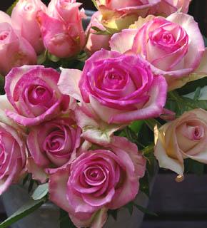 <h2><br/>とびきりポップなピンク色のふちどり、小粋なブーケにまとめて、キュートさを強調しましょう。浅く明るいグリーンとの相性がいいお花です。</h2>