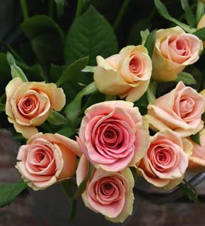 <h2><br/>外側がビンテージピンク、中心が濃い桃色をした大きめのバラ。開いてくるとピンク色が強く出るため、華やかさが増すお花です。</h2>