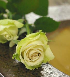 <h2><br/>外側がグリーンがかり、中心がクリームピンクのニュアンスのあるバラ。中間色として人気の品種。アクセントのあるお花と組み合わせたい。</h2>