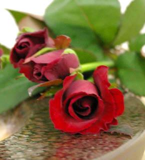 <h2><br/>真紅のバラの代表的な品種。ベルベットの質感、深い赤色は誰からも支持されているロングセラーのバラです。1年を通してオーダー可。</h2>
