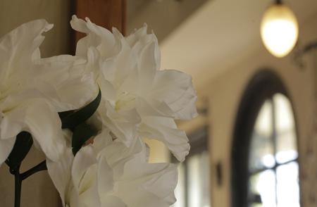 八重咲きユリ「マイウェディング」